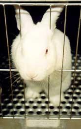 Conigli in gabbia
