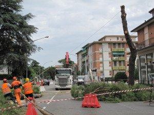 abbattimento alberi viale bolognesi forlì